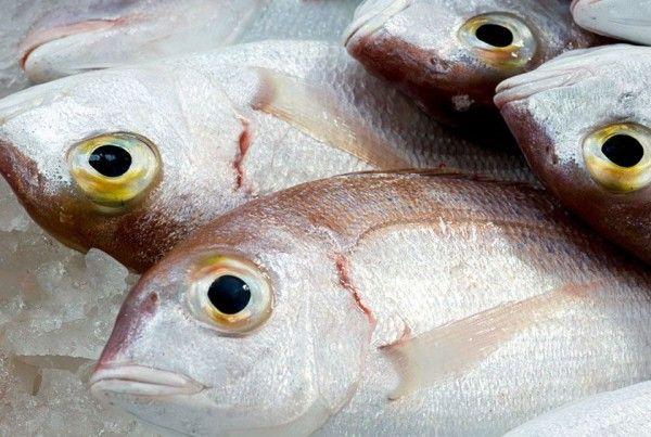 fish lumptail searobin pelágicos