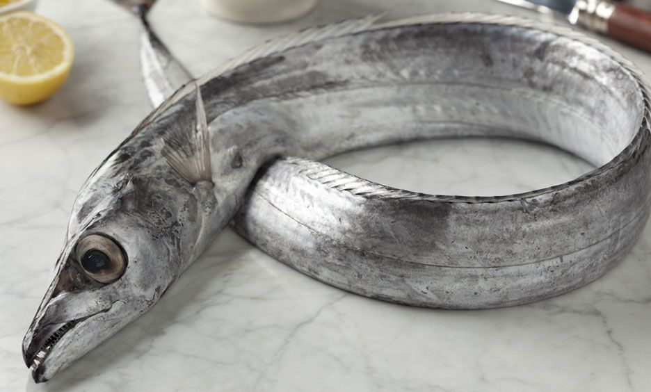 fish ribbonfish pelágicos